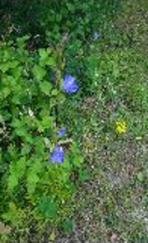 20b flowers