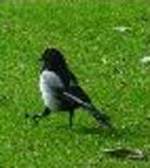 31e bird2