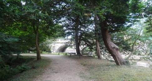 9c trees